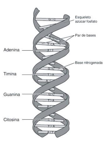 Nociones De Bioquímica Y Genética útiles Para Los