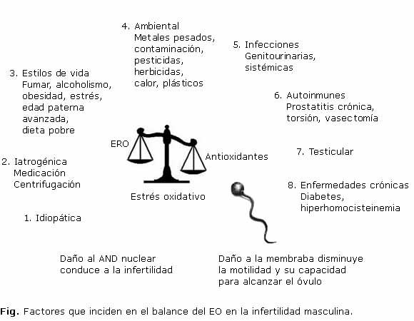 Desbalance redox en la infertilidad masculina