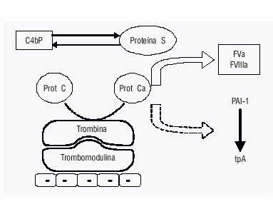 Apcr Activated Protein C Resistance