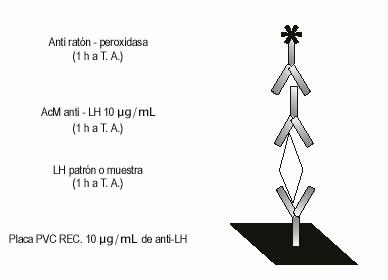 Determinación de la hormona luteinizante (LH) en plasma por un