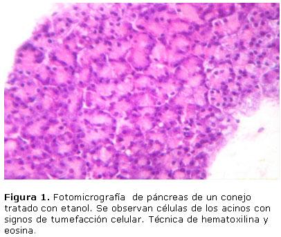 Efectos del ácido fólico sobre las características histológicas del ...