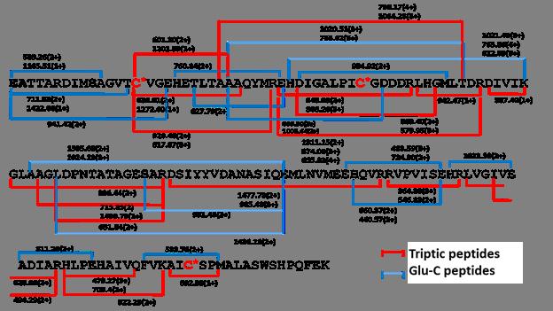 Proteína recombinante Rv2626c de Mycobacterium tuberculosis